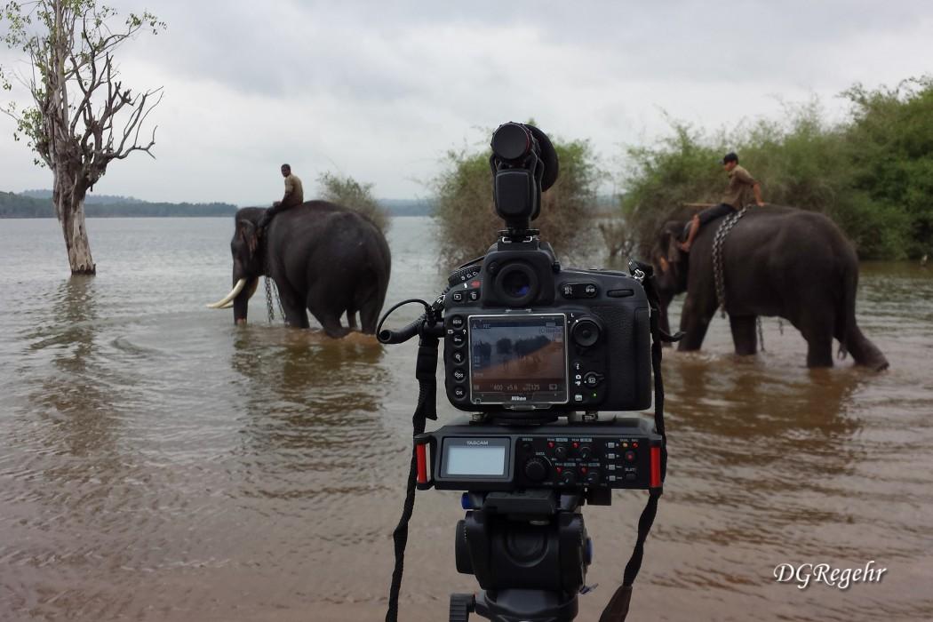 Tascam-Sakrebyle-elephant-camp